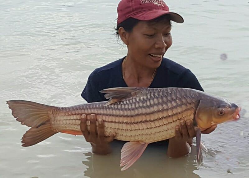 juliens-golden-prize-carp-thailand