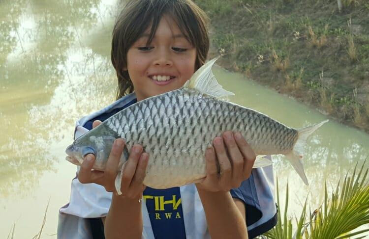 pla-tapien-fish-thailand