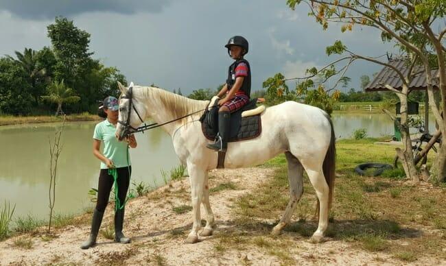 facebook-selfy-horse