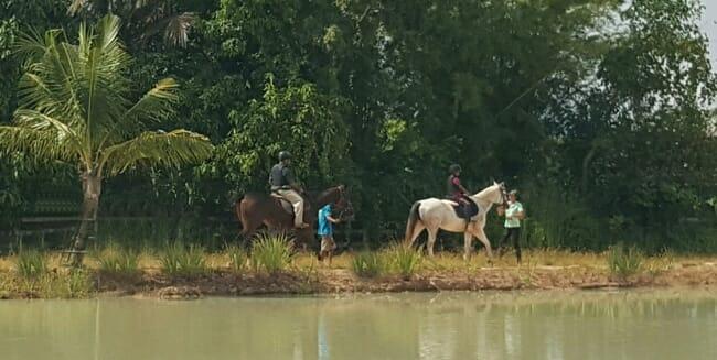 lead-rein-pony-rides-thailand