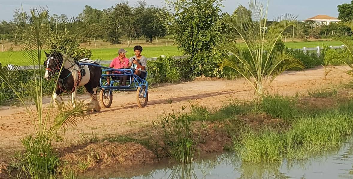 cart-horse-thailand