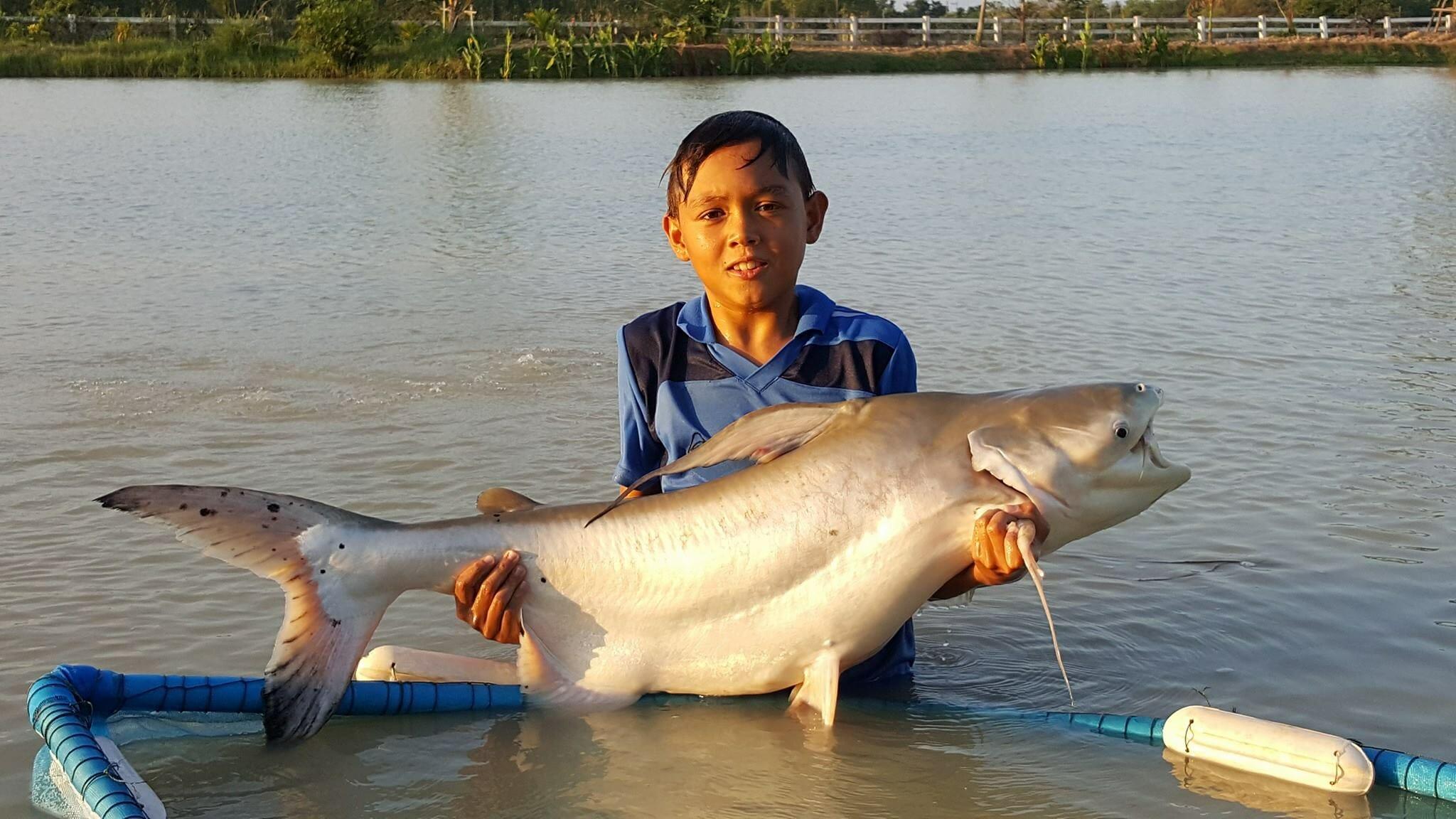 Giant Dog Eating Catfish Caught On