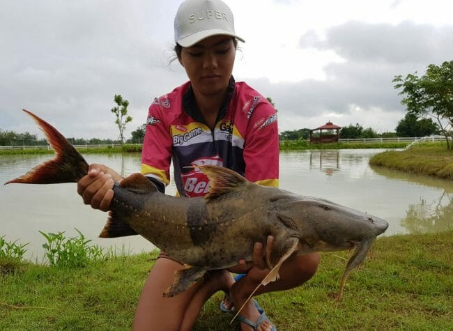 another two new residents this morning Goonch Devil Catfish - Bagarius ปลาแค้